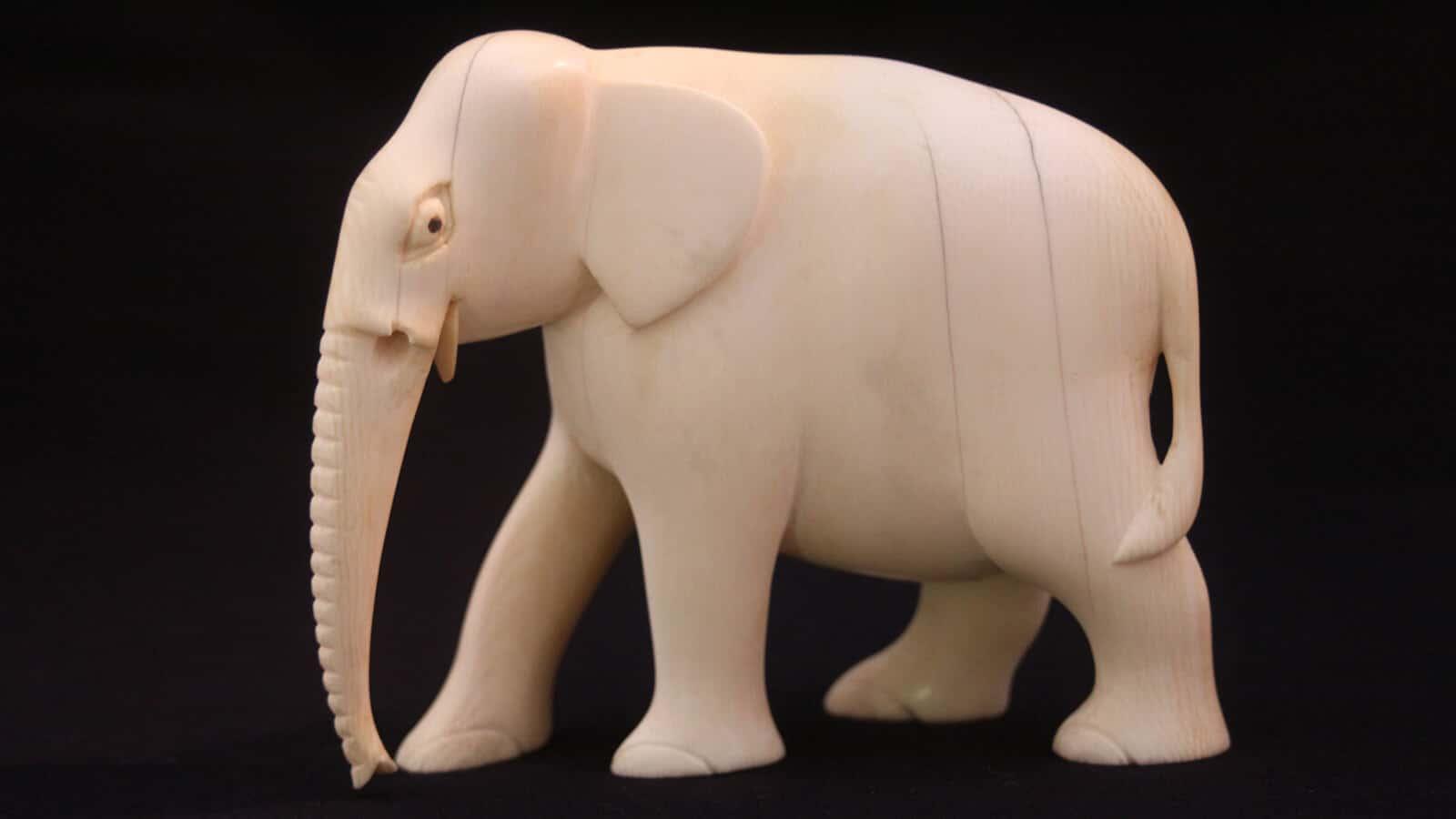 elephant-web