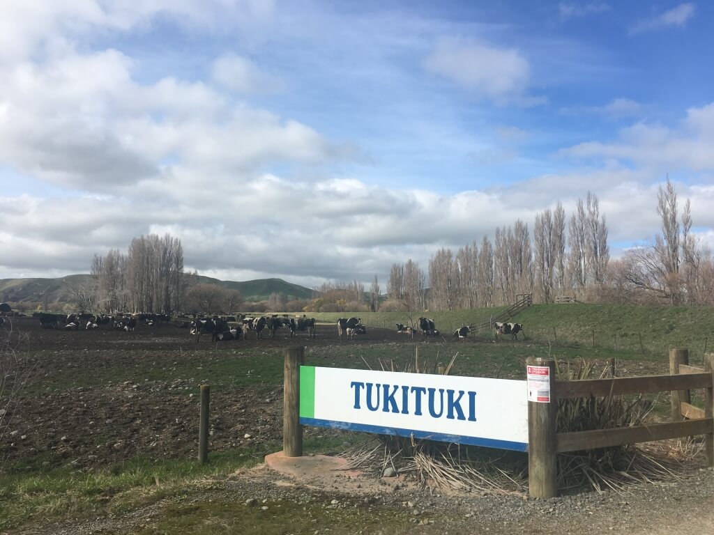 Tuki feedlot